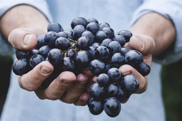 Vinho Orgânico vs Natural: Qual a diferença?
