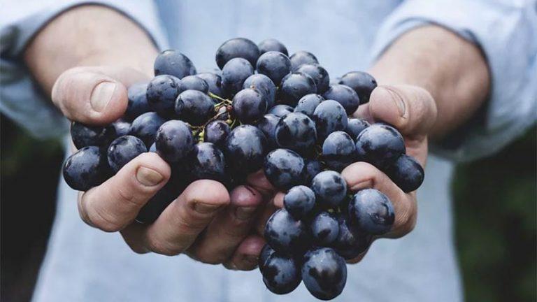 Poesia: 'Aprendi o Nome das Uvas'