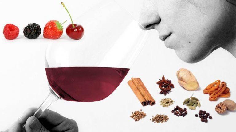 Os aromas característicos de cada tipo de uva no vinho