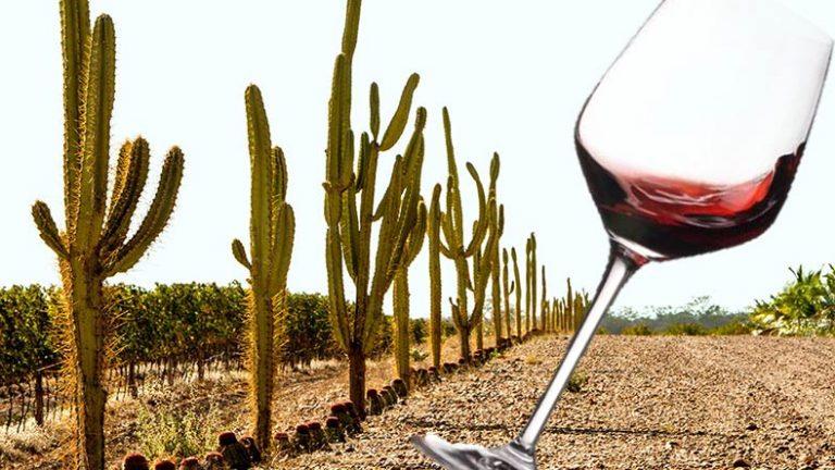 Sertão brasileiro se torna uma das regiões vinícolas mais importantes do país!