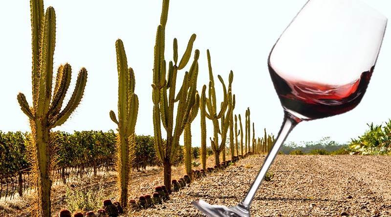 Sertão brasileiro se torna uma das regiões vinícolas mais importantes do país! - Eu Amo Vinho