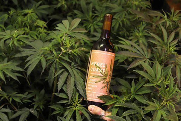 Vinícola californiana lança vinho com infusão de maconha!