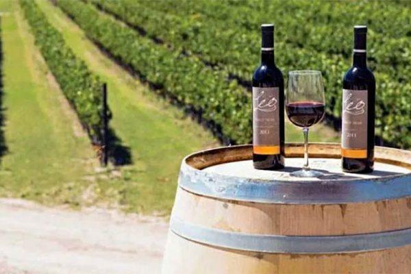 Vinho Mexicano é eleito o Melhor Cabernet do mundo em 2020