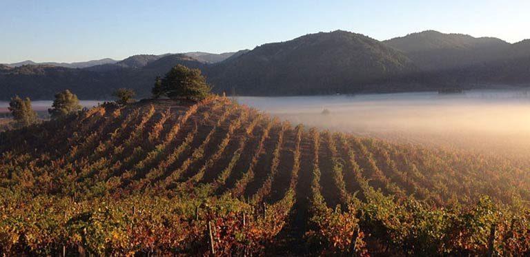 8 Vinícolas do Chile que representam a vanguarda do vinho chileno
