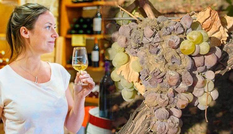Sauternes e Tokaji: Conheça os vinhos que são feitos com uvas 'podres'