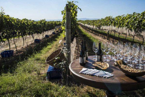 Os Vinhos da Serra da Mantiqueira estão com tudo!